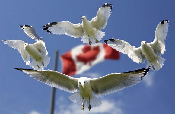 Viaje al genuino noreste de Canadá