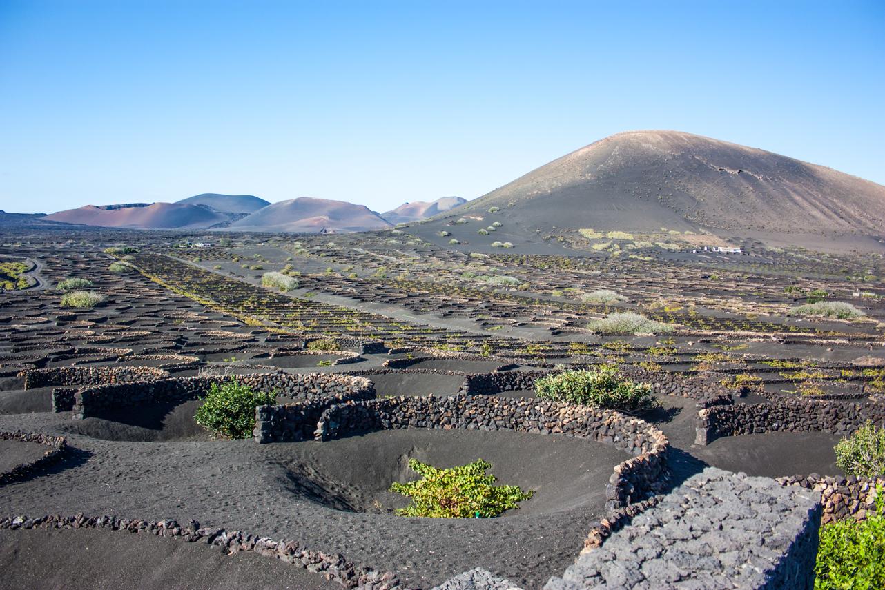 Viñas de Malvasia - La Geria - que hacer en Lanzarote