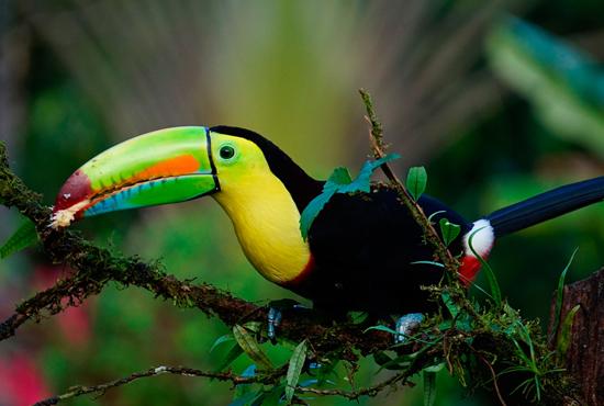 Pura Vida Costa Rica especial