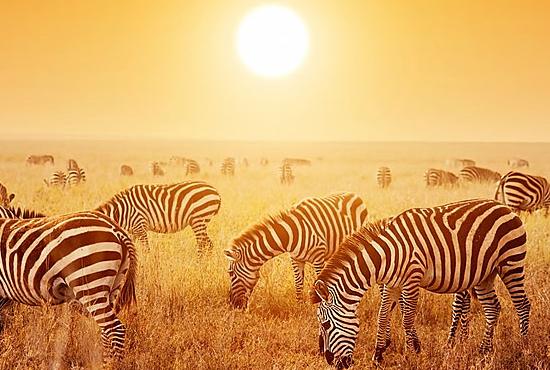 La Migración en Kenya Safari Masai Mara