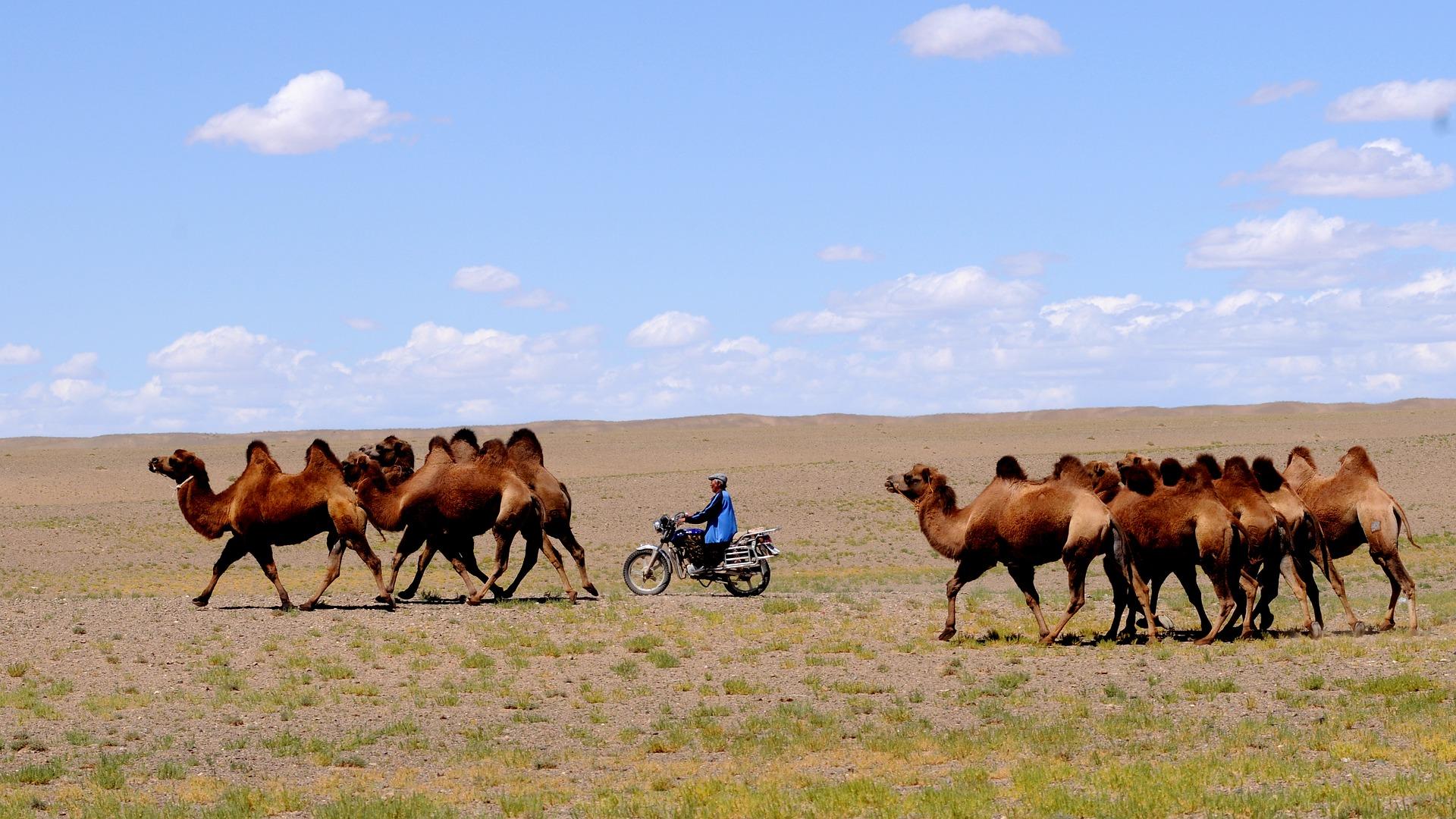 Descubriendo Mongolia el país de Gengis Khan