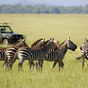 Safari: Solo Tanzania en pensión completa y en español