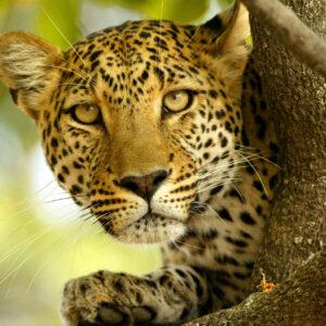 Esencias de Kenia en Safari