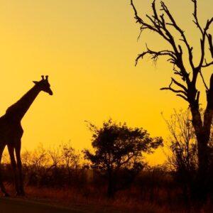 Sudáfrica classic safari