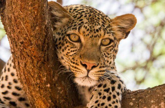 Gran Safari por Tanzania en pensión completa