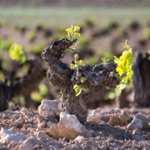 Bodega para dos con el mejor vino de la Manchuela