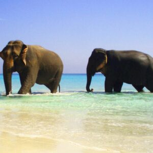 Exotica India y playas de Andaman