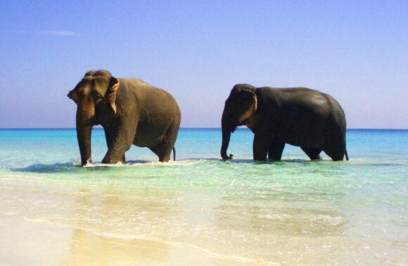 Exotica India y playas de Andaman