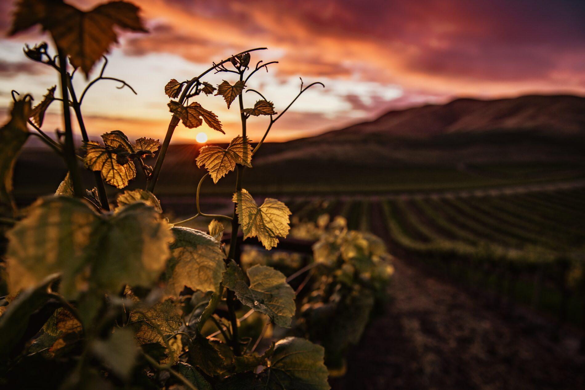 La Rioja en bici: Cicloturismo para gourmets
