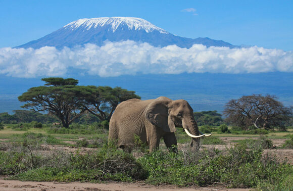 Safari Jambo en Kenia