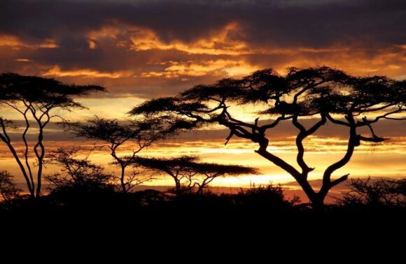 Safari Imprescindible Kenia y Tanzania