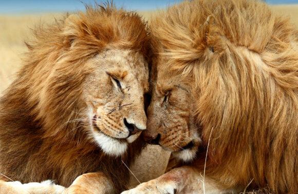 Safari: La Joya de Kenia al completo