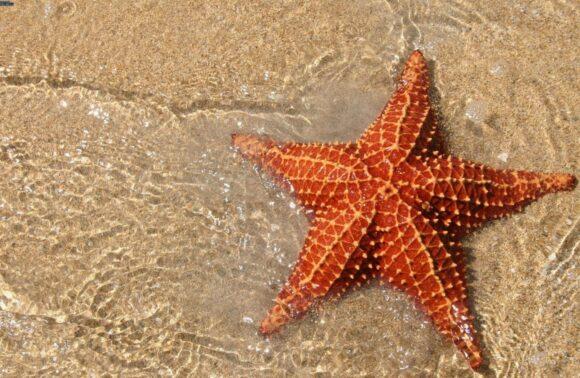 Cultura y playa en Panamá
